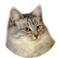 Приют для кошек 33 хвоста