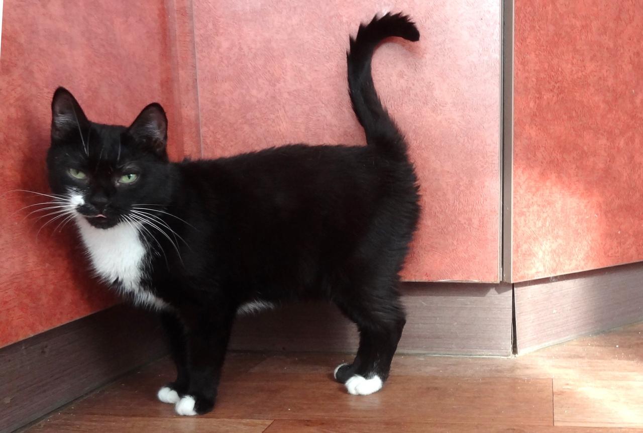 Кошка Наоми