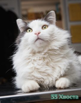 Кот Пуша