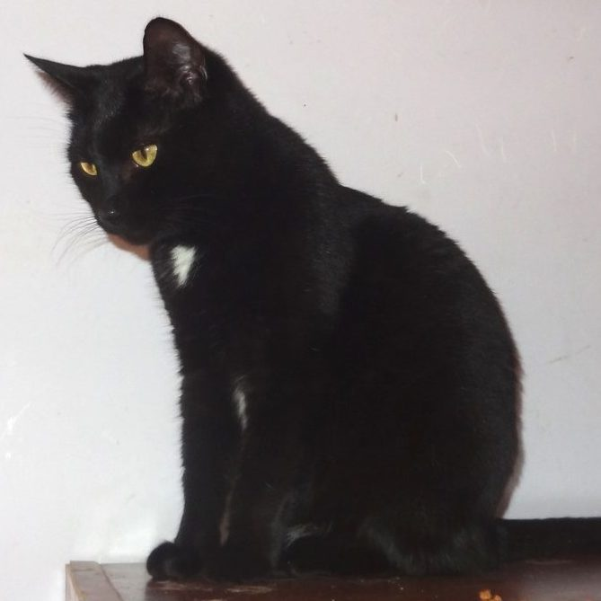 Кошка Спарта