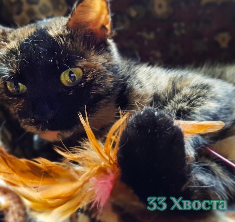 Кошка Клара