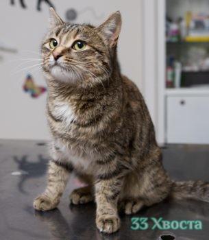 Кошка Глафира