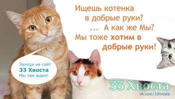 Кошки в добрые руки в Самаре