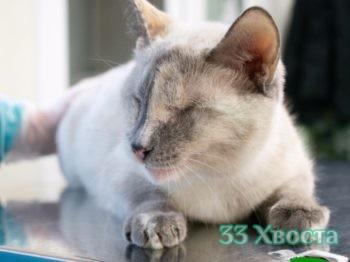 кошка Фанни