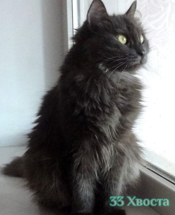 Кошка Каролина