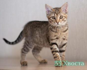 котенок Ларсик