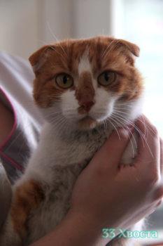 Кошка Тосики