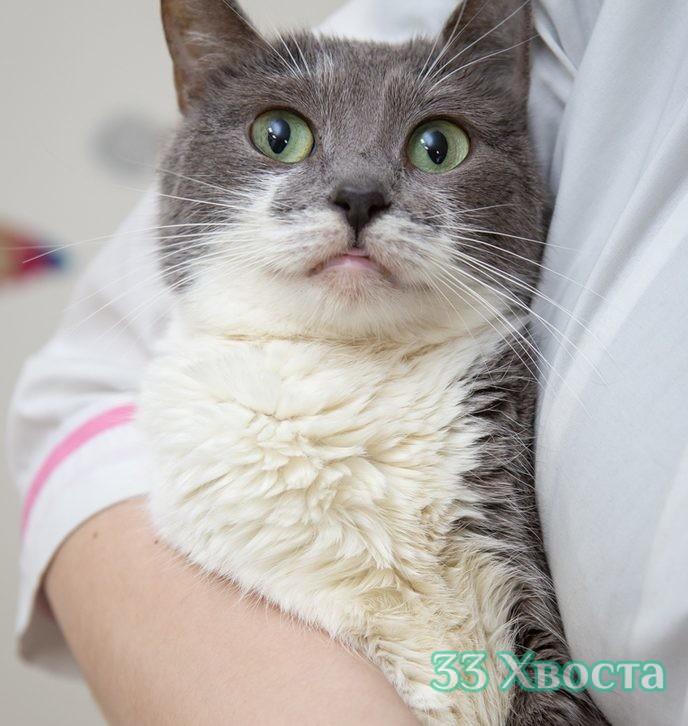 Кошка Акапулька