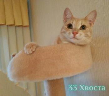 Котик Персик