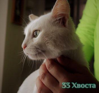Кот Оникс