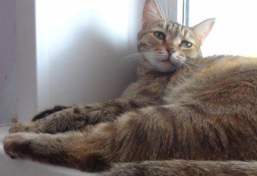 Кошка Кисточка