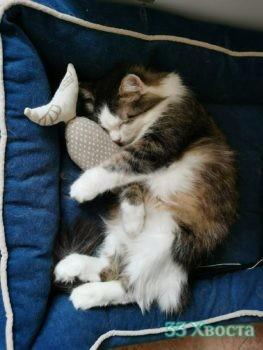 кот Лёва