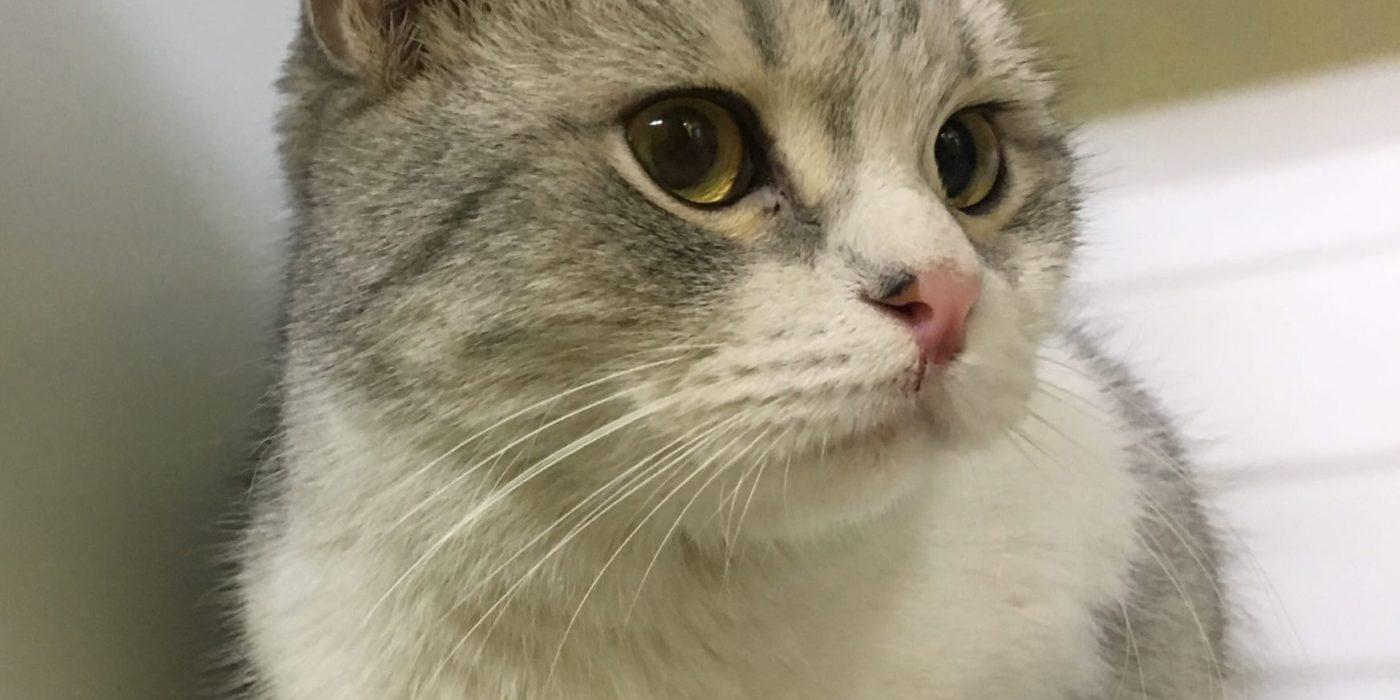 кот Плюша