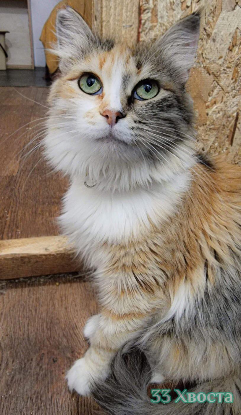 кошка венера